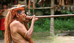 250px-Yahua Blowgun Amazon Iquitos Peru